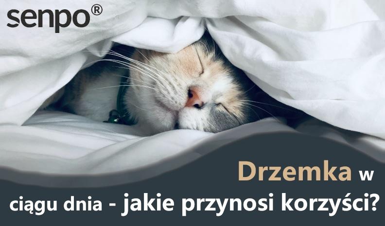 drzemka blog
